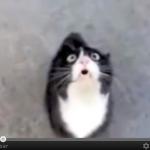 おしゃべり猫